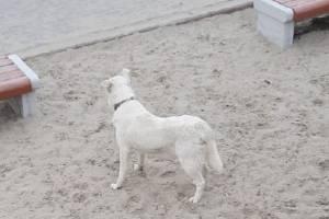В Фокино на женщину с ребенком напала собака