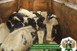 В Брянской области с начала года задержали 184 белорусских коровы