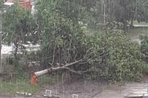 В Брянске ураганный ветер обрушил несколько деревьев