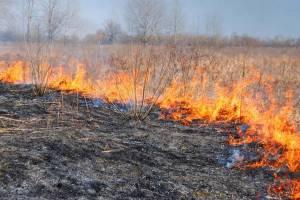 На Брянщине потушили больше 70 палов травы за сутки