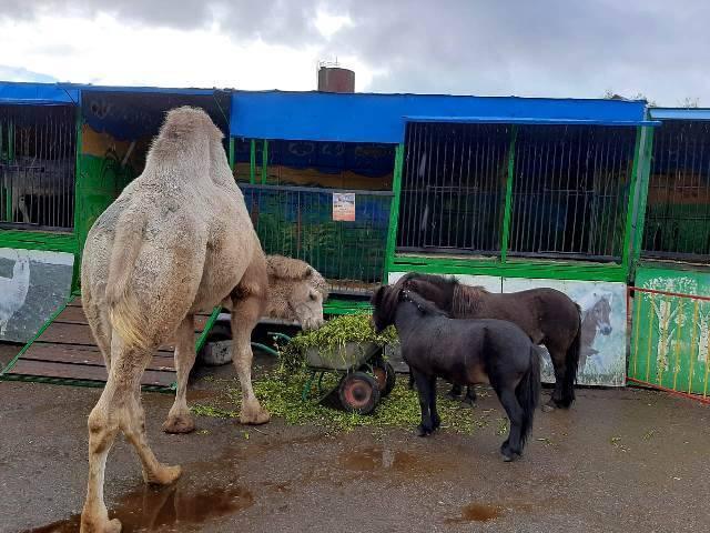 Росприроднадзор проверит зоопарк «Ноев Ковчег» в Карачеве