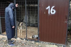 В Злынковском районе устроили охоту на собак без видеозаписи