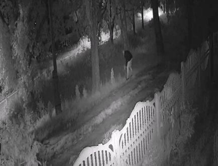 В Дятьково женщина под покровом ночи вышла на охоту за туями