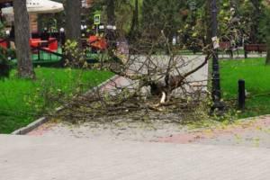 В Круглом сквере Брянска на тротуар рухнула тяжелая ветка дерева