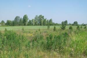 Нерадивую брянскую землевладелицу оштрафовали на 10 тысяч рублей