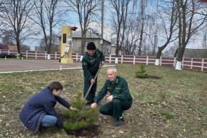 Брянские школьники озеленили площадку возле памятника партизанам и подпольщикам