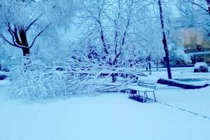 В Брянске рухнуло дерево возле цирка