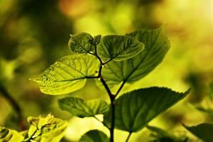 В Брянской области появится почётное звание «Заслуженный эколог»