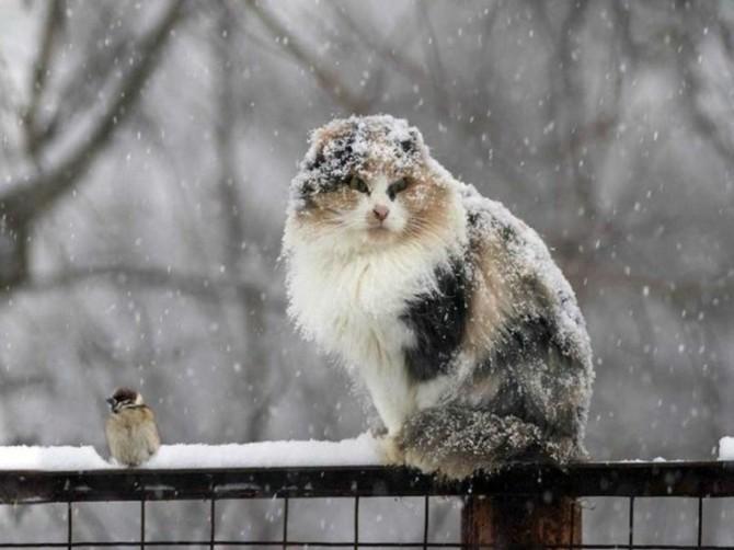Брянцев во вторник ожидает небольшой снег