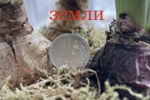 Новая кадастровая оценка на Брянщине пройдёт в 2022-2023 годах