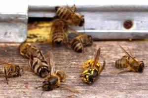 Брянские сельхозпроизводители отравили пчёл
