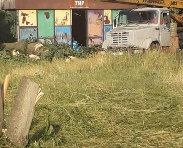В Клинцах варварски уничтожают деревья в парке Воровского