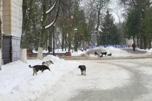 Жители Брянска пожаловались на стаю собак в сквере Карла Маркса