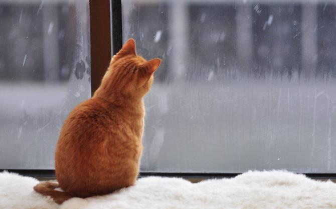 Жителям Брянщины пообещали «красный» январь