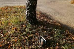 Новозыбков завалило трупами голубей
