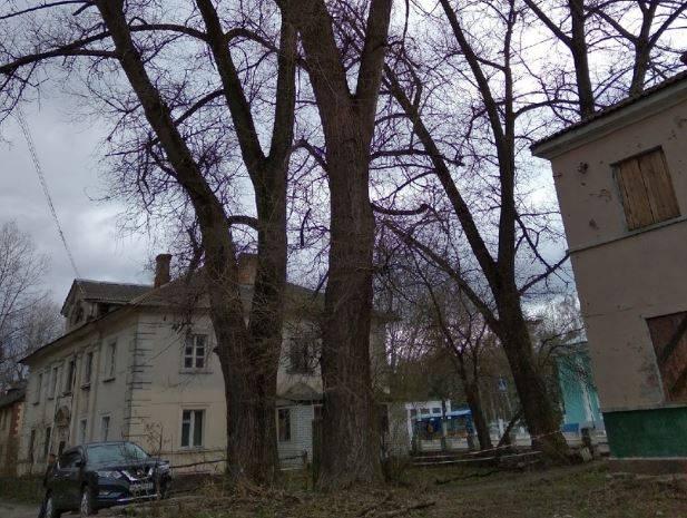 Обращение к губернатору не помогло: тополя угрожают жителям Брянска