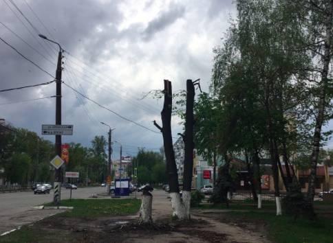 В Брянске изуродовали деревья у остановки «Березка»