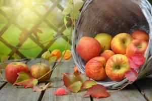 На Брянщине «Яблочный спас» отпразднуют концертом «Бабкиных внуков»