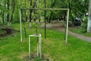 В Брянске во дворе многоэтажки перед футбольными воротами посадили дерево