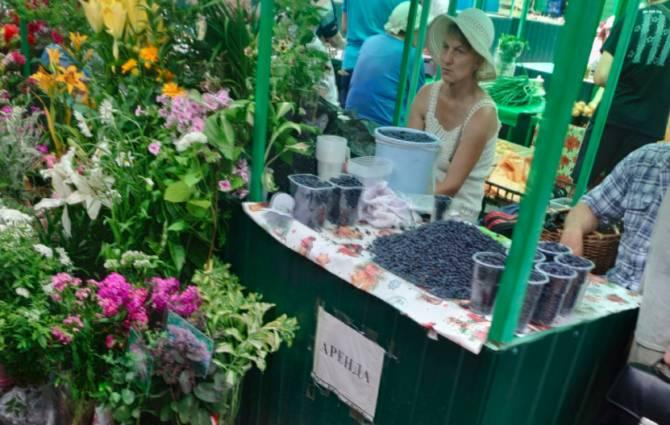 На рынках Брянской области началась бойкая торговля черникой