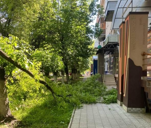 В Брянске возле салона красоты рухнуло дерево