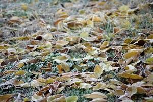 В Брянске из-за заморозков объявили экстренное предупреждение