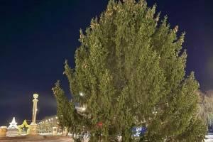 В Брянске установили елку на Кургане Бессмертия