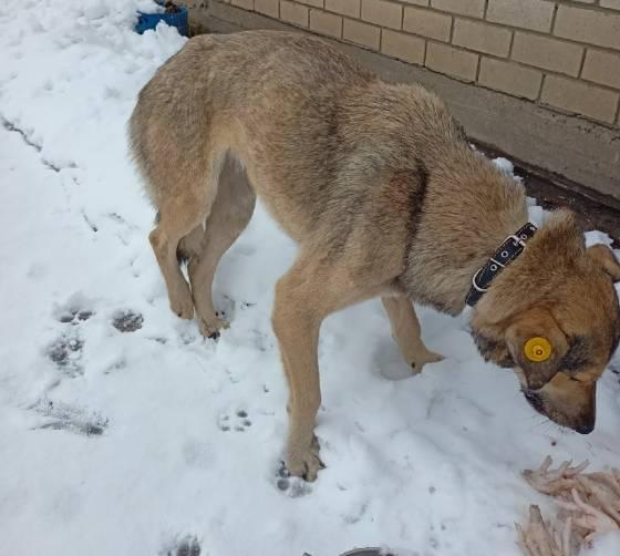 В Брянске неизвестные расстреляли бездомного пса