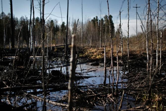В брянском лесу обнаружили нефтяное пятно
