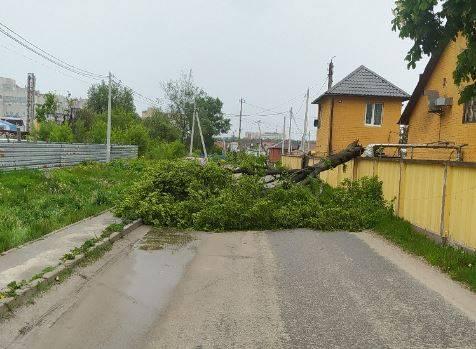 Под Брянском рухнувшее дерево перекрыло дорогу