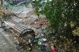 В Брянске возле «Самолета» на аллее устроили свинарник