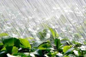 Брянцам 23 мая обещают дождь с градом