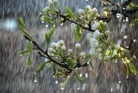 Май в Брянской области обещают дождливым