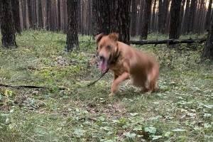Брянцы спасли от голодной смерти собаку