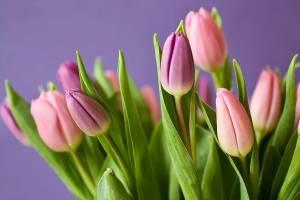 В Стародубе волонтеры вручили медикам цветы