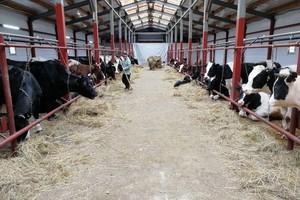 На стародубской ферме работников не обучили правилам охраны труда