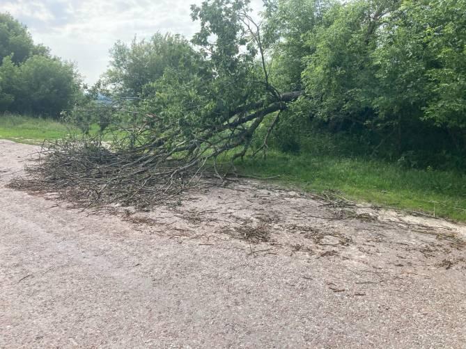 Почепские чиновники неделю не могут убрать рухнувшее на дорогу дерево