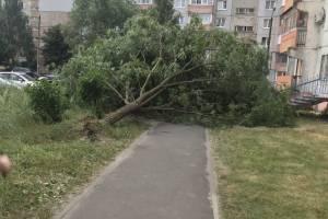 В Брянске на Новостройке рухнуло очередное дерево