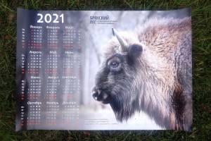 Заповедник «Брянский лес» выпустил календари с зубрами