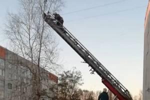 В Брянске пожарные спасли застрявшего на дереве кота Василия