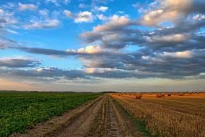Брянские работники сельского хозяйства отмечают профессиональный праздник