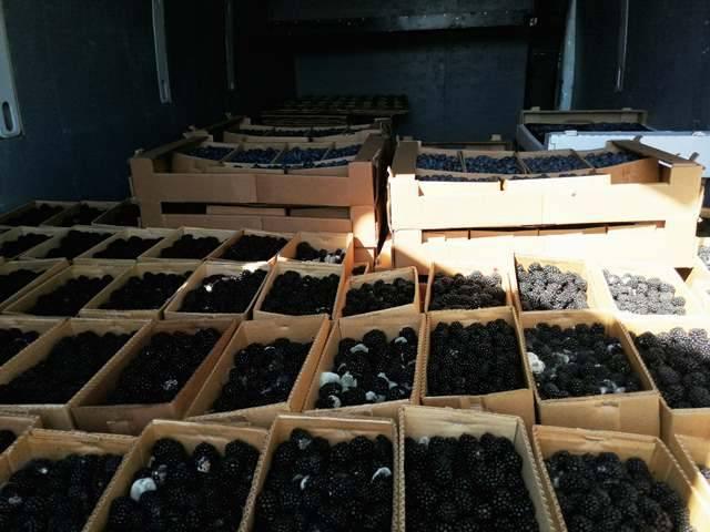 В Злынковском районе задержали микроавтобус с ягодами без документов
