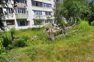 В Клинцах под окнами многоэтажки свалка заросла травой