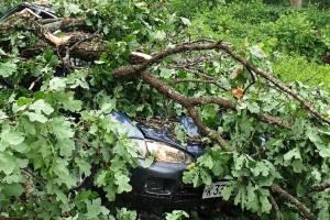 В брянском поселке Белые Берега упавшие деревья раздавили легковушку