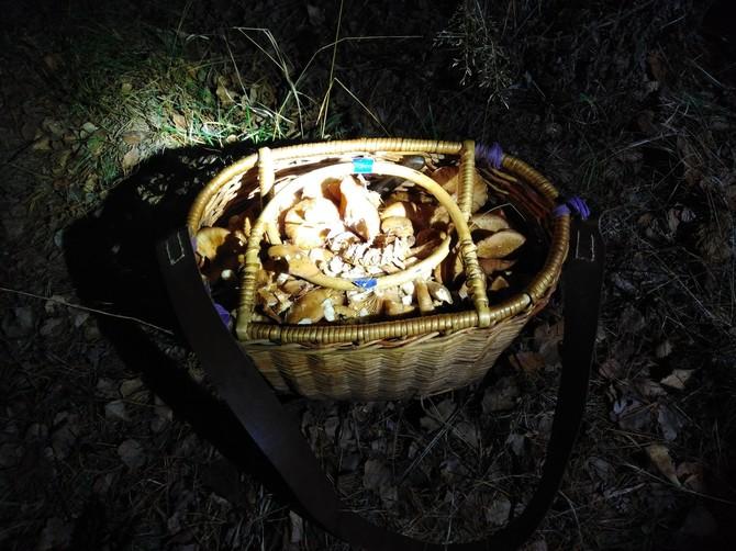 Под Брянском пропавшую пенсионерку нашли живой