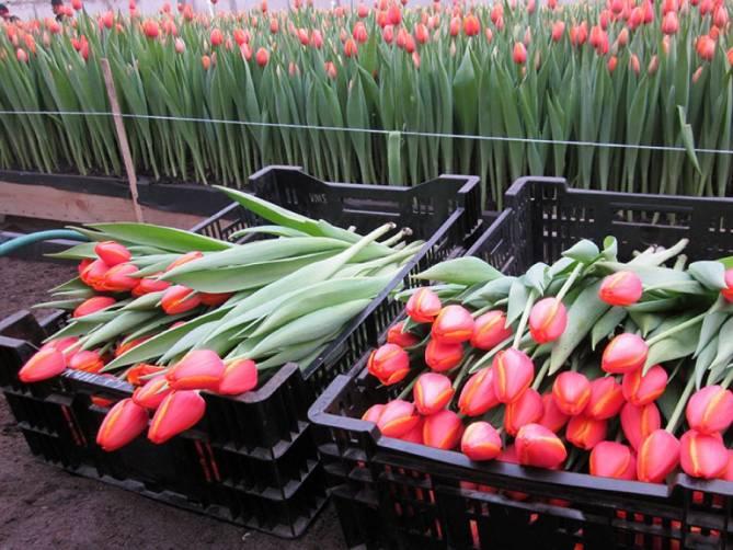 Брянские продавцы перед 8 марта задрали цены на цветы