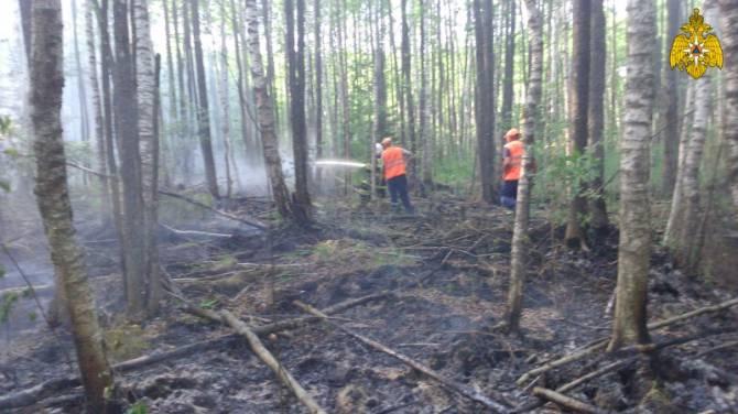 На Брянщине за сутки потушили шесть лесных пожаров