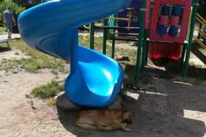 В Брянске рассказали о нападении собак на детских площадках