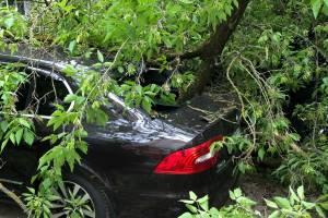 В Брянске на улице Пушкина на иномарку рухнуло дерево