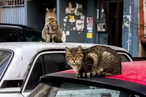 В Клинцах водитель сбил на дороге кошку и скрылся с места ДТП